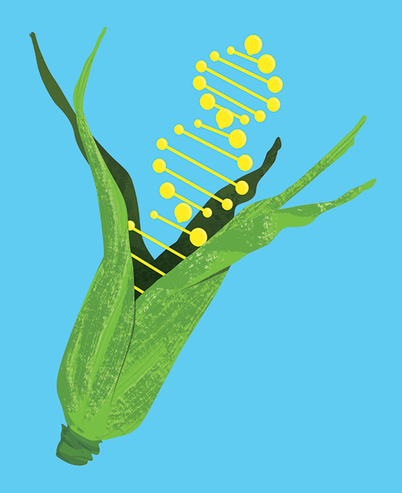 GMOCrops_Web